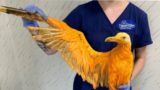 'Exotic' bird was really just seagull covered in curry powder