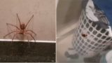 Aussie bloke lets spider take on cockroach after finding both in bathroom