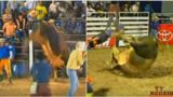 'The Bandit' is a Brazilian bull that no-one has been able to ride successfully
