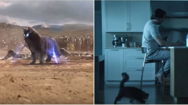 This bloke improves movies by editing his cat into them