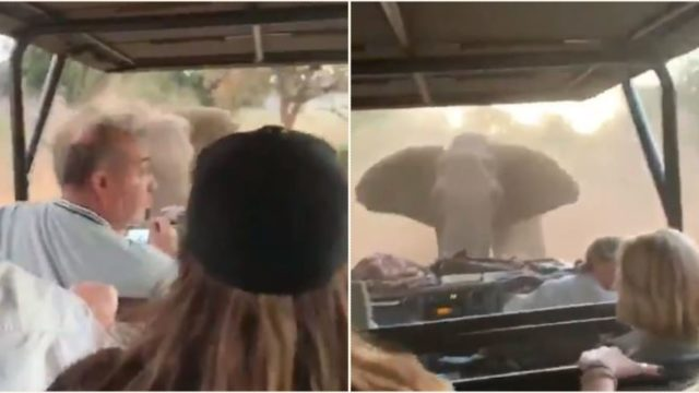 Bloke escapes charging elephant with an epic reverse-drive