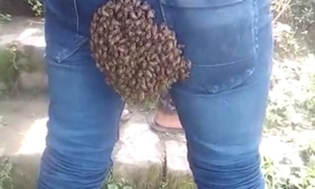 Bloke has colony of bees settle on his bum while driving