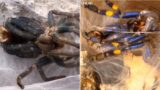 Footage of spiders shedding their skin in new time-lapse video
