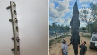Farm owner makes grisly discovery inside a dead croc's stomach