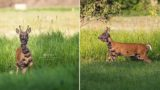 Photographer captures heartbreaking images of deer with severe skin condition