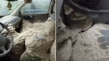 Dude finds a giant wasp nest inside creepy abandoned car