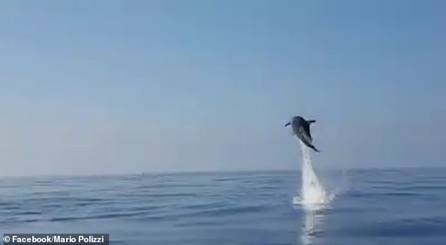 Incredible moment as mother dolphin jumps to thank fishermen for rescuing her baby