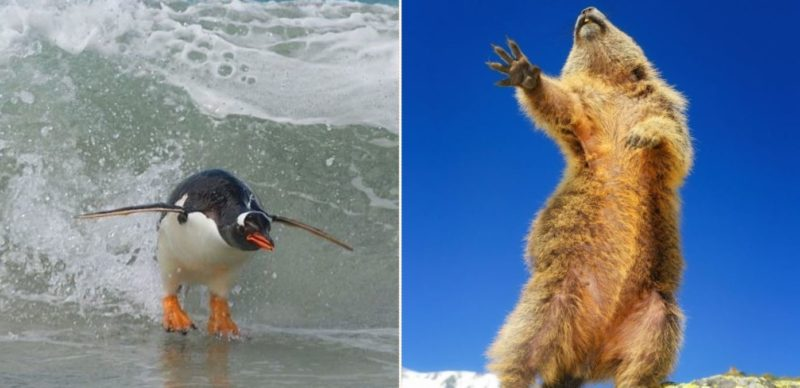 This year's Comedy Wildlife Photo Award finalists are bloody gold