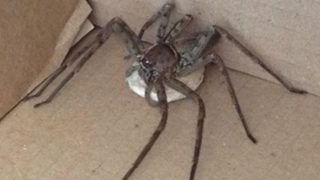 Sheila has shared her cheap hack to stop spiders coming in her house