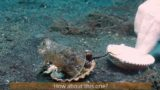 Diver attempts to convince fussy octopus to give up it's plastic cup armour