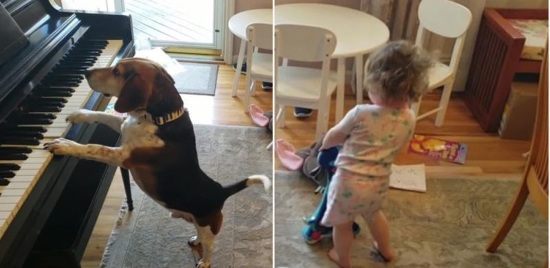Bloke accidentally captures video of daughter dancing to their dog playing piano