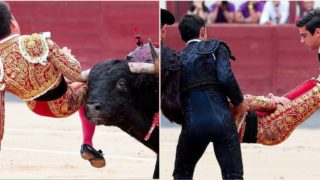 Bull sends famous bullfighter's groin to Destination F**ked for the second time
