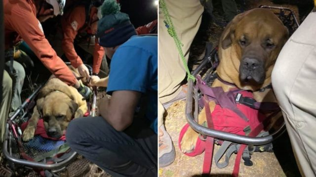 Massive dog needs rescuing from mountain after getting too tired to walk down