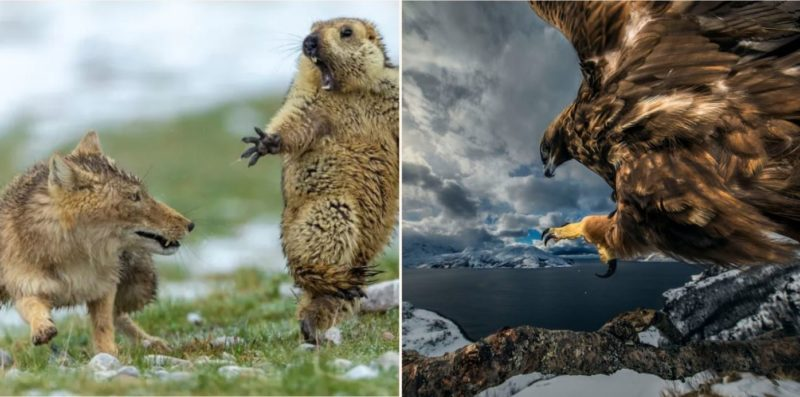 The winners of the Wildlife Photographer of the Year comp are in!
