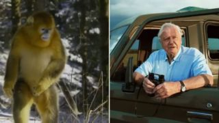 It took David Attenborough 50 years to capture footage of this monkey species