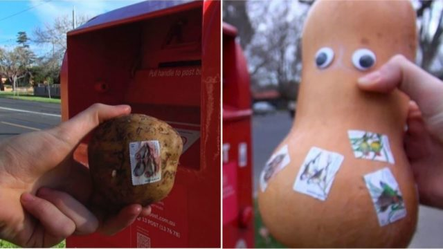 This bloke mailed vegetables – and other junk – to test the limits of Australia Post