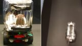 Rats have learnt how to drive cars to get Froot Loops