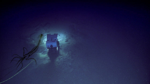 Deep sea submarine explorer is stalked by bloody scary Abyssal Squid