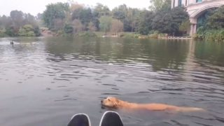 F*@#en wanker swan lays the smack down on dog going for a swim