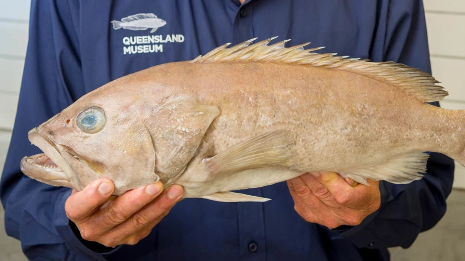 Turns out Aussies have been eating a fish unknown to science