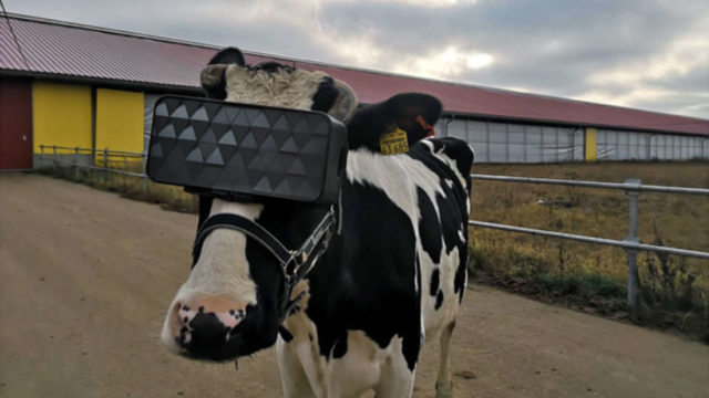 Russian farmers are moving their cows into a f*@#en VR utopia