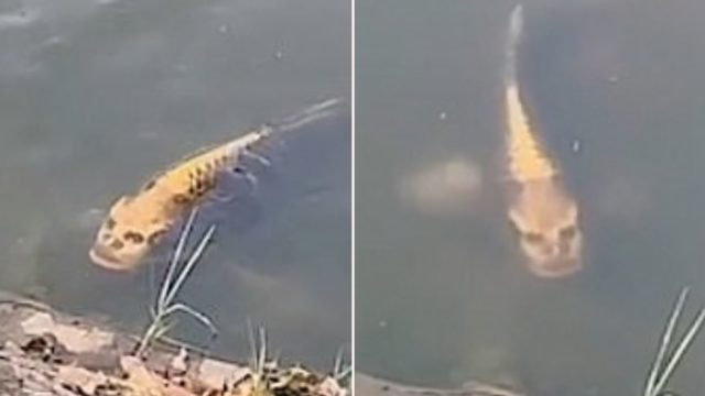 This Chinese fish has got people freaking out