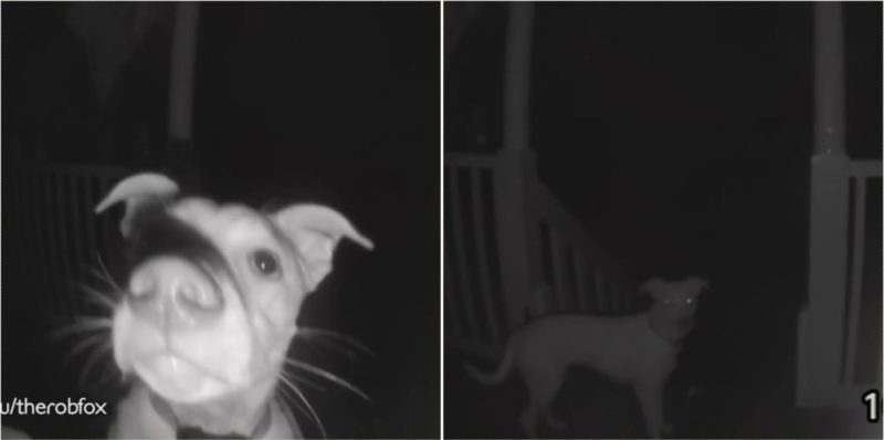 Clever bloody dog rings doorbell at 2am after getting locked out!
