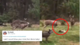 People on Twitter reacted to the viral deer 'shag' video and they're pure gold