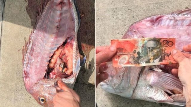 This local fisherman went viral after discovering a $20 note inside fish