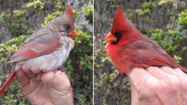 Gender neutral bird stuns bird experts!