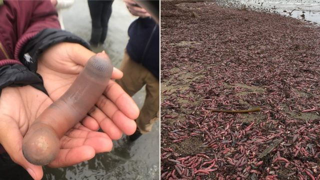 The Internet is throbbing over 'Fish' that have appeared on a Californian beach