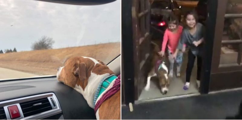 This family dog was returned after being stolen then taken 2000 miles away