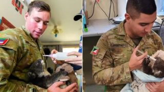 Aussie soldiers are caring for injured koalas when on break from fighting bushfires