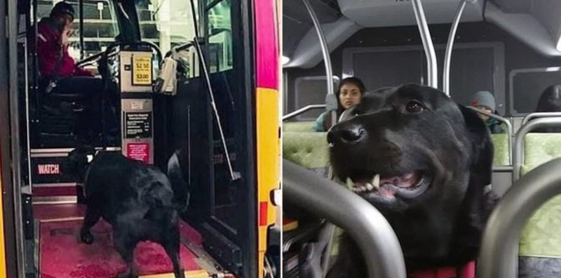 Legendary dog catches the bus to the dog park – by itself – every day