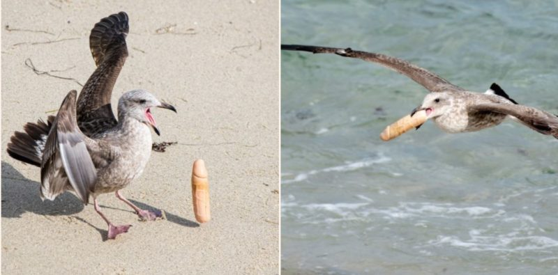 These cheeky seagulls were busted playing with a ladies 'pocket rocket'
