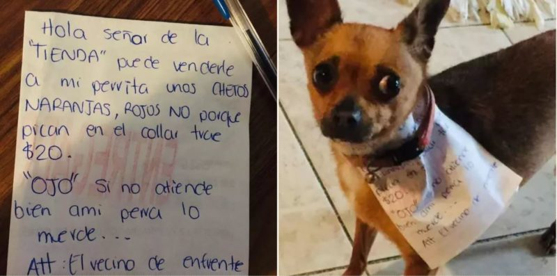 Quarantined Mexican bloke sends pooch to the store to get Cheetos