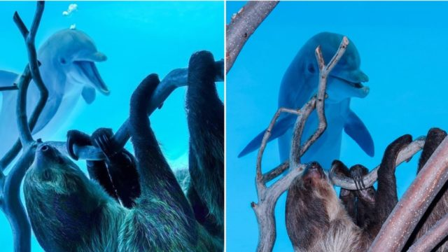 Cheeky dolphins get excited over a sloth coming to say G'day on private Zoo tour