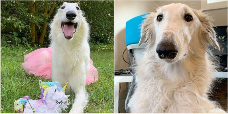 Dog with 'world record' 12-inch long snout has become an internet sensation