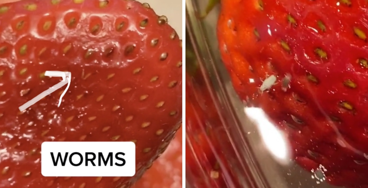 People are vowing never to eat strawberries again after TikTok video shows hidden bugs