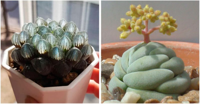 Check out these mintox f**ken succulents!