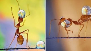 Woman's smartphone photos of hardworking Ants has been awarded
