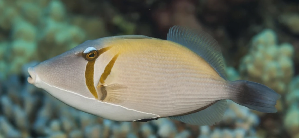 This bloody fish has baffled the internet with its weird 'human' lips!