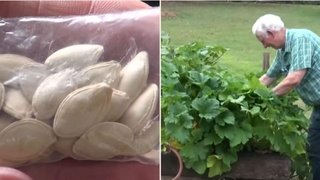 Bloke warned not to plants seeds sent from China says they're 'growing like crazy'