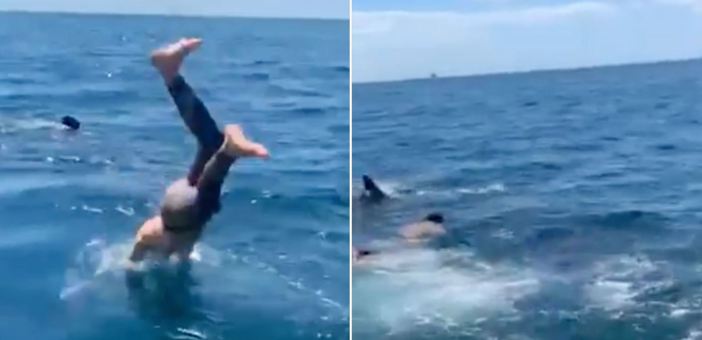 Man dives in to swim with harmless shark, then realises it is a Great White