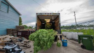 Canadian Police seize $150 million in weed, weapons, and 3 f*@#en kangaroos!