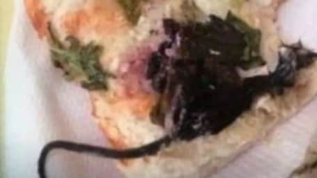 Aussie hospital worker gets dished up a bloody rat burger at local cafe