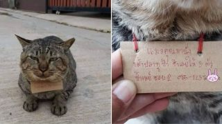 Cat missing for three days returns home with note around his neck
