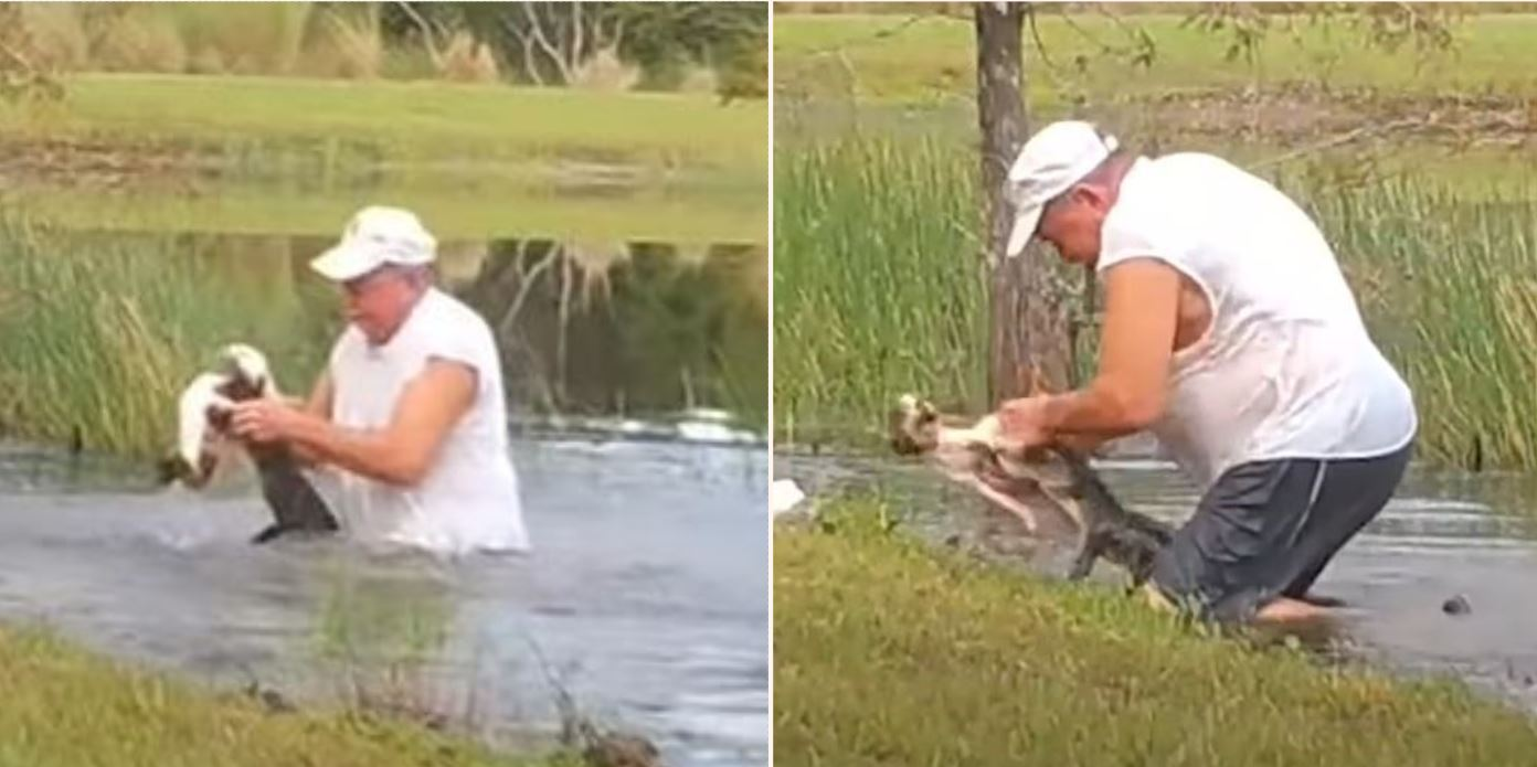 Legend from Florida saves drowning puppy from jaws of Alligator