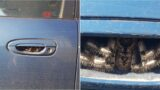 """""""Thought it was hairy caterpillars at first. Haven't used my car for a week"""""""
