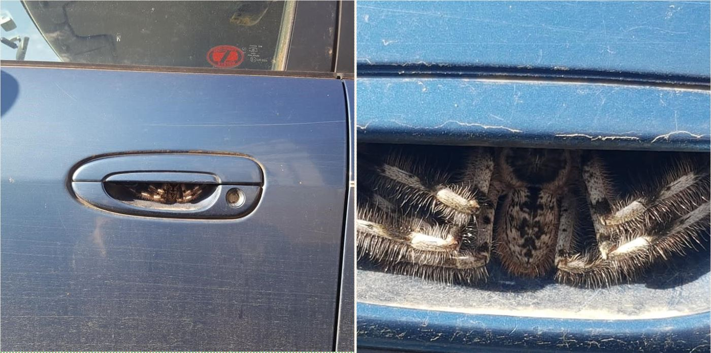 """Thought it was hairy caterpillars at first. Haven't used my car for a week"""